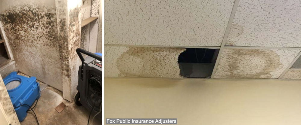 This homeowner needed mold removal in South Florida.