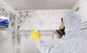 Mold removal in South Florida