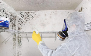 Mold Removal in Florida