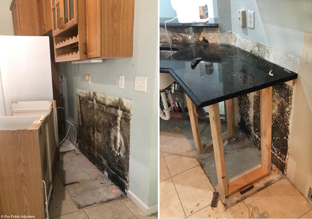 Mold everyplace in this Boca Raton home.