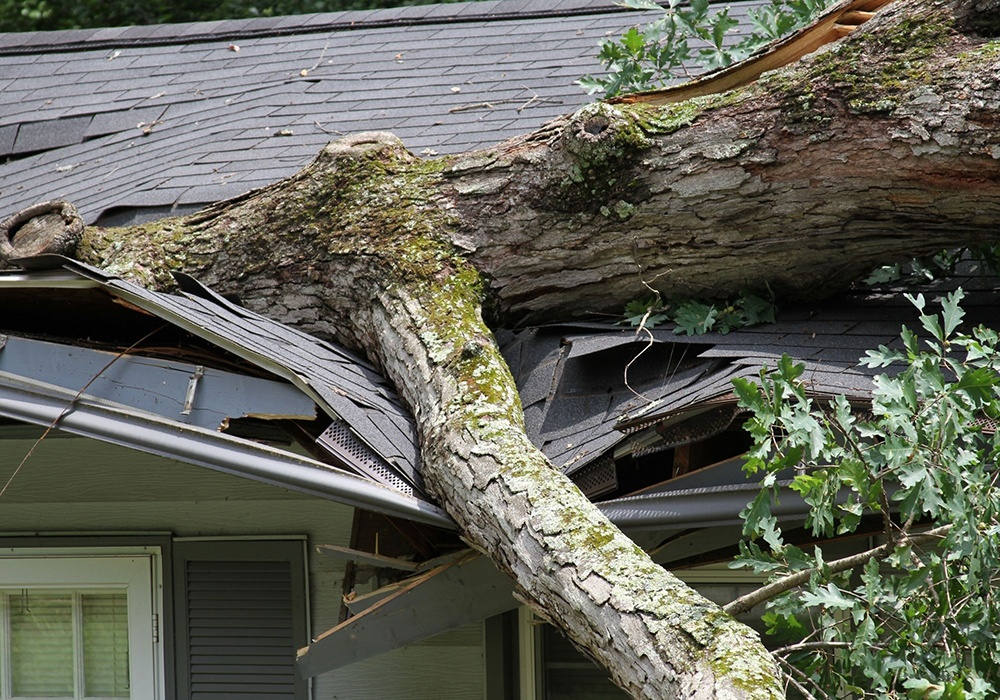 insurance claim denied? let us help, tree smashed into a homes roof.